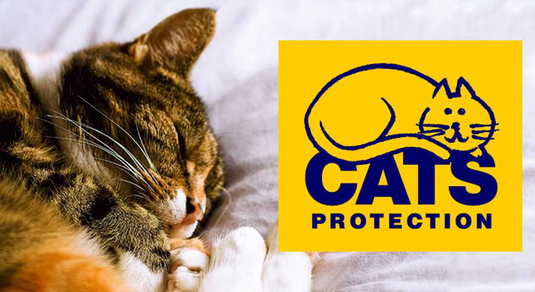Moray Cats Protection - seeking assistance.