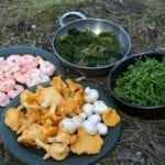 Foraging Fortnight – Moray programme launched